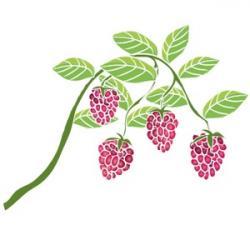 Raspberry clipart vine
