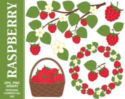 Raspberry clipart strawberry basket