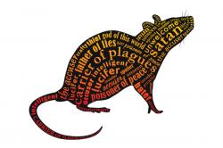 Rat clipart flea