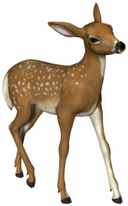 Fawn clipart roe deer