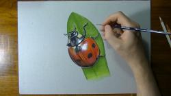 Drawn ladybug sketch