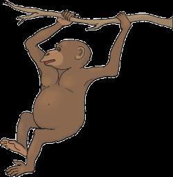 Chimpanzee clipart monkey hanging