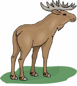 Moose clipart wildlife