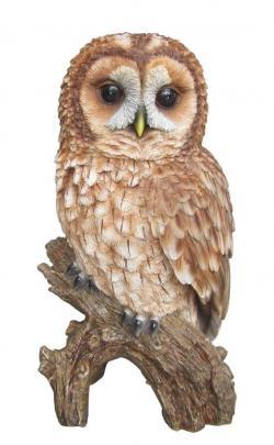 Barred Owl clipart tawny owl