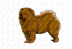 Chow Chow clipart chow chow dog