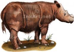 Drawn rhino sumatran rhino
