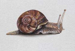 Drawn snail realistic