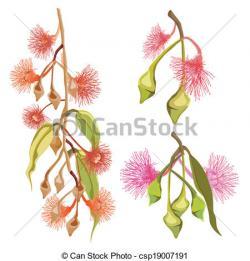 Eucalyptus clipart flower