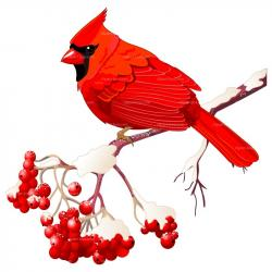 Finch clipart red bird