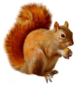 Chipmunk clipart squirell