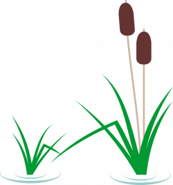 Reed clipart cartoon