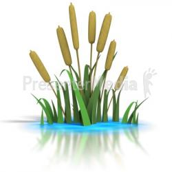 Reed clipart cattail
