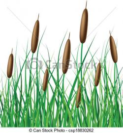 Reed clipart marsh grass