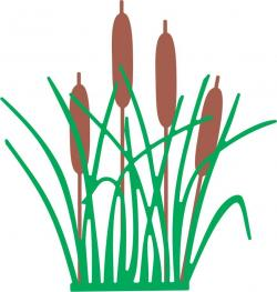 Reed clipart nature cartoon