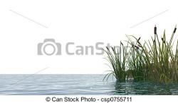 Reed clipart pond reed