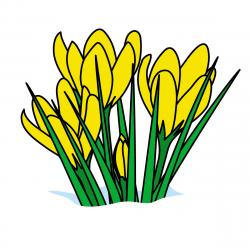 Irish clipart march flower