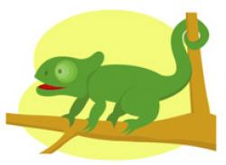Chameleon clipart reptile