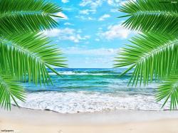 Tropics clipart wallpaper