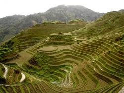 Rice Terrace clipart baguio