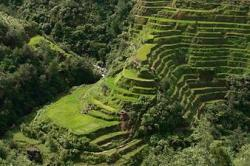 Rice Terrace clipart banaue rice terrace