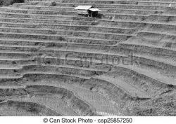 Rice Terrace clipart black and white
