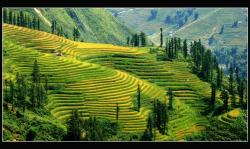 Rice Terrace clipart mountain