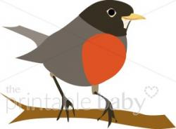 Bluebird clipart robin bird