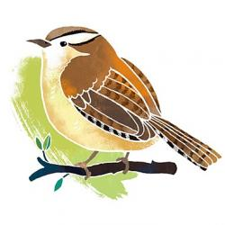 Robin clipart wren