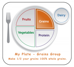 Grains clipart my plate