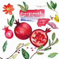 Pomegranate clipart logo