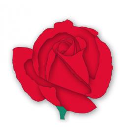 Romance clipart valentine rose