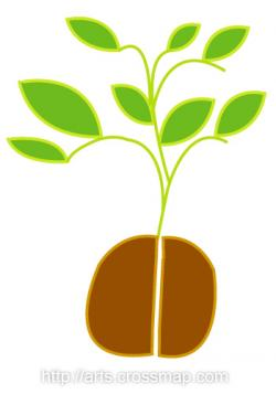 Roots clipart baby seedling