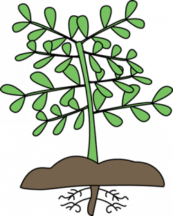 Roots clipart cute plant