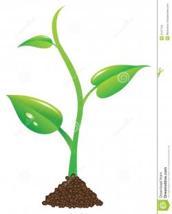 Roots clipart little plant