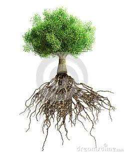 Roots clipart mango