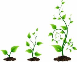 Roots clipart plant growth
