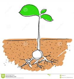 Roots clipart plant seed