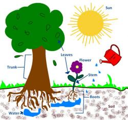 Roots clipart sunlight plant
