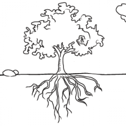 Roots clipart tree drawing