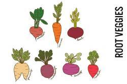 Radish clipart root vegetable