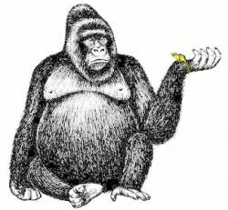 Footprint clipart gorilla