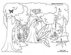 Drawn jungle temperate rainforest