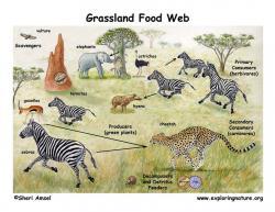 Sream clipart grassland habitat