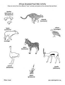 Herbivorous clipart grassland animal