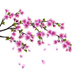 Cherry Blossom clipart cartoon