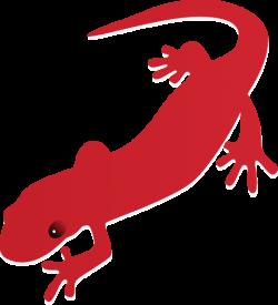 Amphibian clipart newt