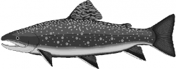 Trout clipart black animal