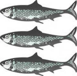 Sardines clipart vintage