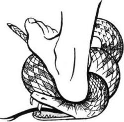 Satanic clipart snake in grass
