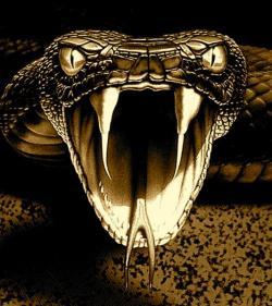 Satanism clipart viper snake